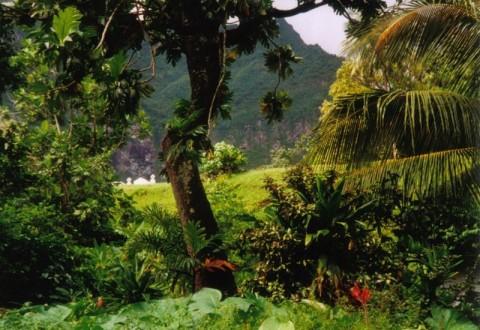 800px-Rainforest_Fatu_Hiva